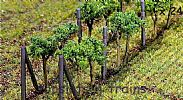 Faller 181254 OO/HO Scale 24 X GRAPE VINES - APPROX HEIGHT 35 mm