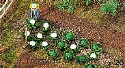Faller 181257 OO/HO Scale 10 X CABBAGES AND 10 X CAULIFLOWERS
