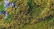 Faller 181615 OO/HO/N Scale Foliage  CLUMP FOLIAGE – LIGHT GREEN 300 x 200 mm