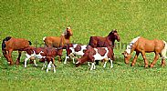 Faller 154002 HO/OO 1-87 Scale Figures HORSES X 4 AND BROWN/WHITE COWS X 4 FIGURE SET